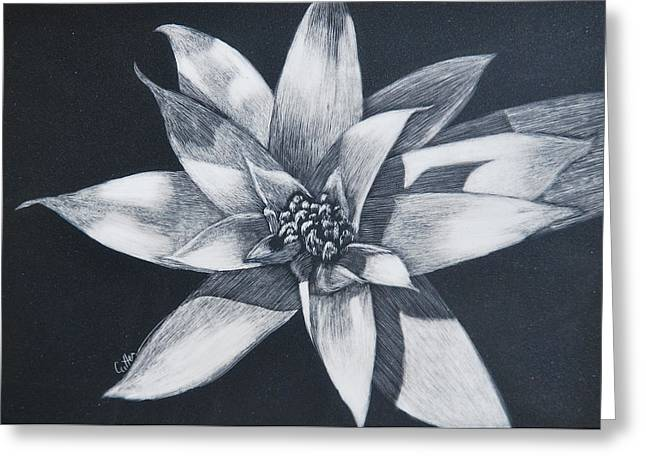 Bromeliad Greeting Card by Diane Cutter