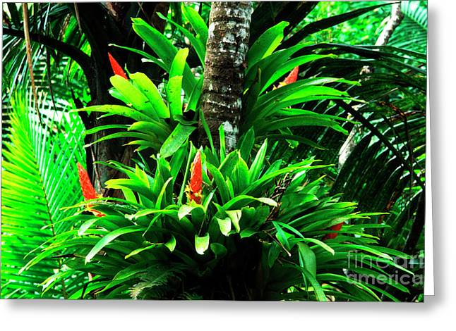 Bromeliads El Yunque National Forest Greeting Card by Thomas R Fletcher
