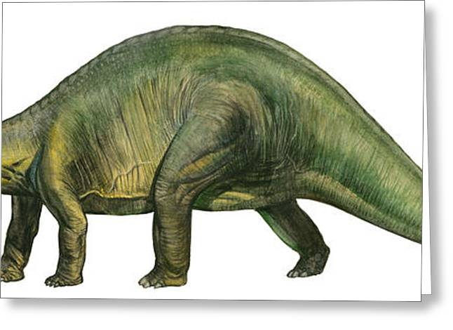 Brontosaurus Greeting Cards - Brontosaurus, A Prehistoric Era Greeting Card by Sergey Krasovskiy