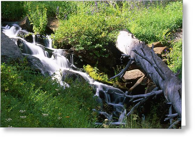 Brook And Deadfall Greeting Card by Soli Deo Gloria Wilderness And Wildlife Photography