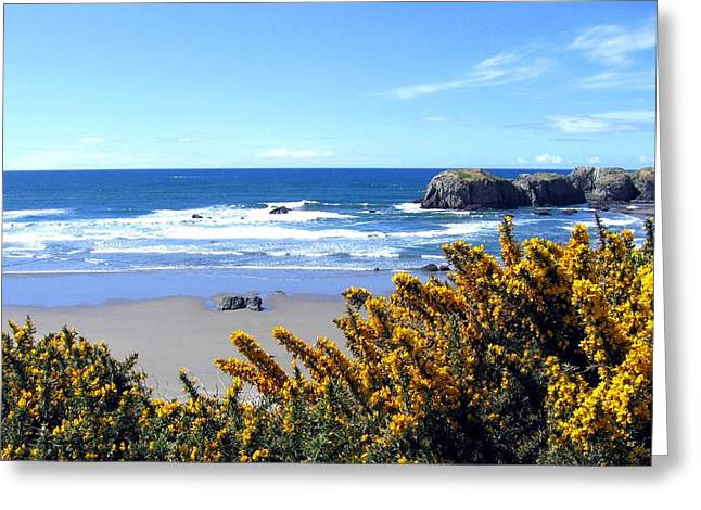 Spectacular Ocean Vistas Greeting Cards - Broom In Bloom Greeting Card by Will Borden
