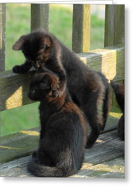 Litter Mates Greeting Cards - Brotherly Love Greeting Card by Joyce StJames