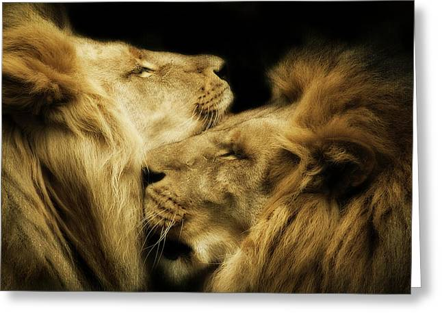 Brothers Greeting Card by Animus  Photography