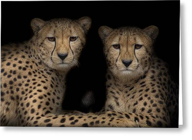 Jaguars Greeting Cards - Brothers Greeting Card by Cheri McEachin