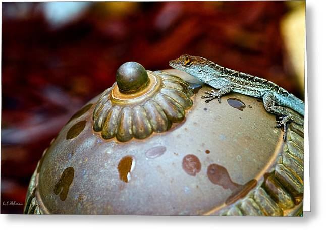 Christopher Holmes Greeting Cards - Brown Anole Greeting Card by Christopher Holmes