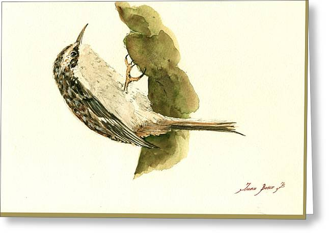 Small Bird Greeting Cards - Brown creeper Greeting Card by Juan  Bosco