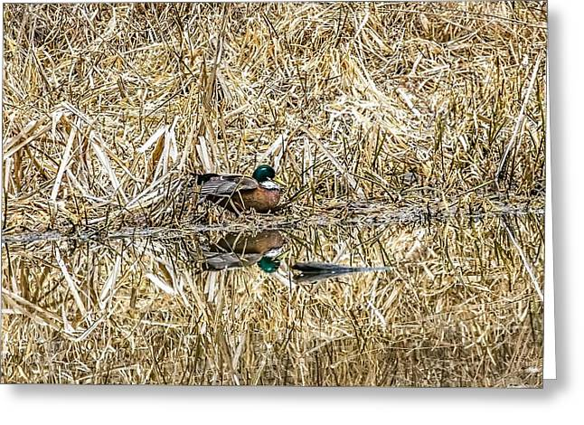 Brown Duck C. Greeting Card by Leif Sohlman