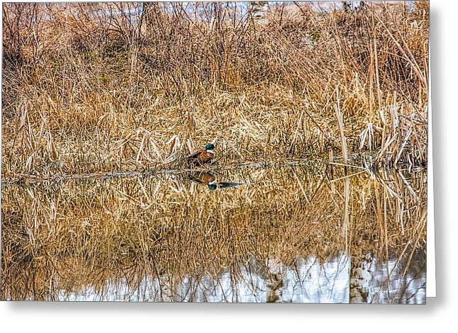 Brown Duck Greeting Card by Leif Sohlman
