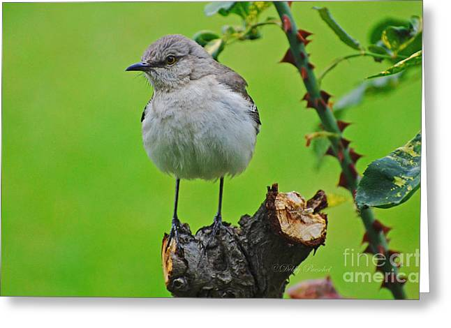 Pensively Greeting Cards - Brown Eyes Greeting Card by Debby Pueschel