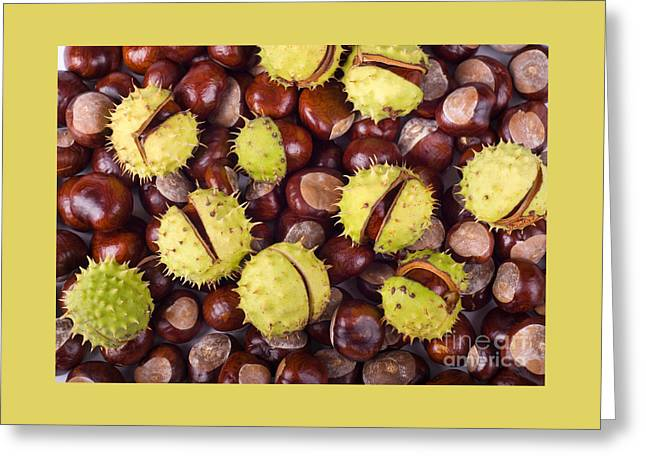 Capsule Greeting Cards - Brown Glossy Conkers Of Horse-chestnut Tree Greeting Card by Arletta Cwalina