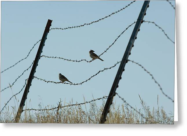 Cowbird Greeting Cards - Brown-headed Cowbirds Sit On A Wire Greeting Card by Joel Sartore