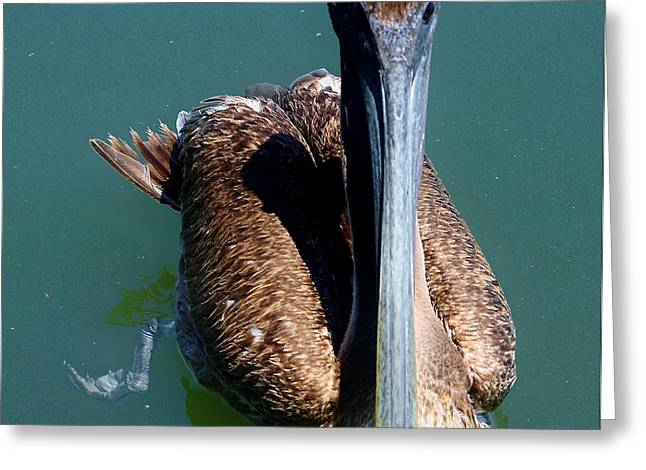 Panama City Beach Greeting Cards - Brown Pelican Greeting Card by Debra Forand