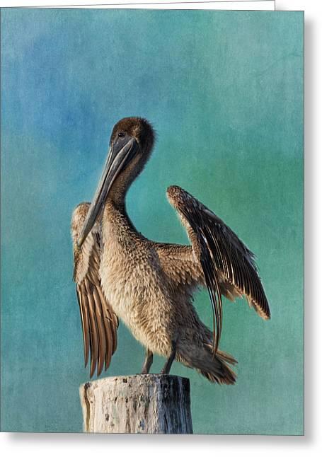 Brown Pelican - Fort Myers Beach Greeting Card by Kim Hojnacki