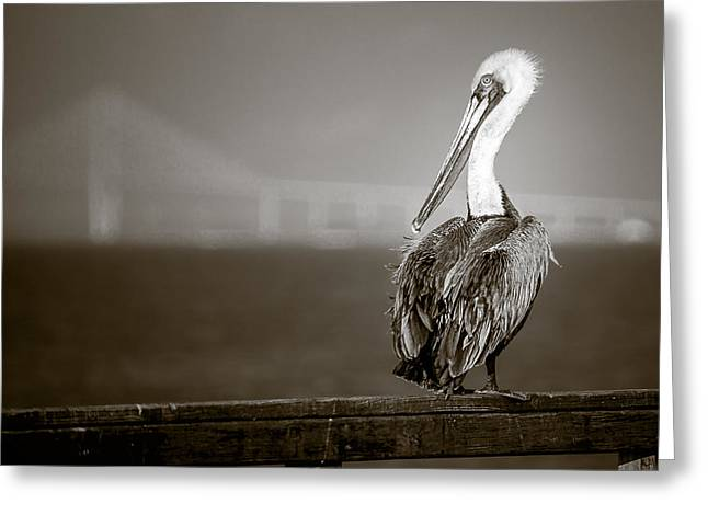 Seabirds Greeting Cards - Brown Pelican on St. Simons Island pier - BW Greeting Card by Chris Bordeleau