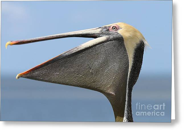 Brown Pelican Pouch Greeting Card by Carol Groenen
