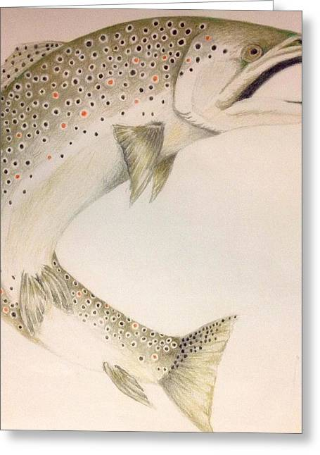 Brown Trout Greeting Cards - Brown Trout Greeting Card by Tony Holm
