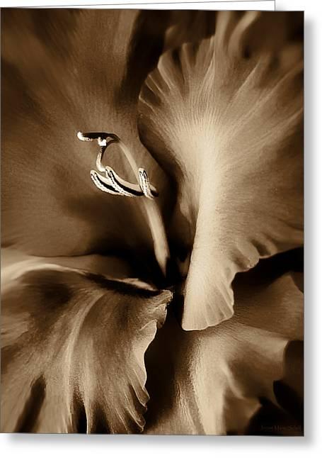 Gladiola Greeting Cards - Brown Velvet Gladiolus Flower Greeting Card by Jennie Marie Schell