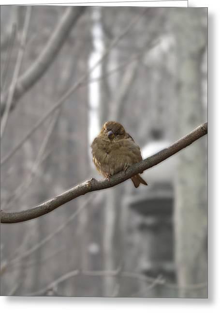 Bryant Park Bird Nyc Greeting Card by Henri Irizarri