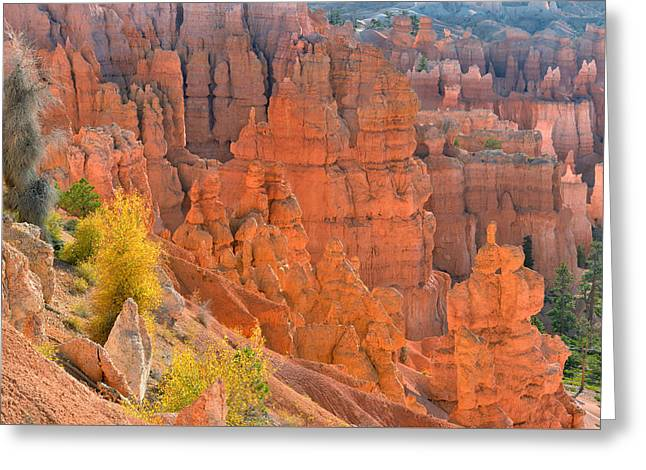 Bryce Canyon Backlighting Greeting Card by Dean Hueber