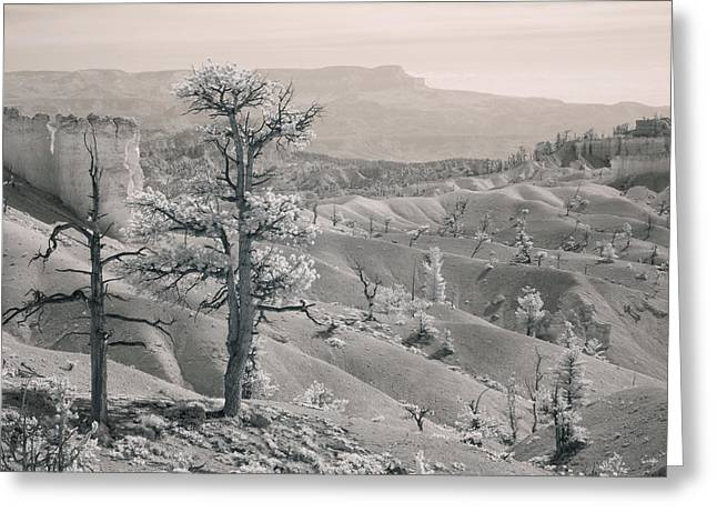 Ir Photography Greeting Cards - Bryce Canyon Infrared Greeting Card by Mike Irwin