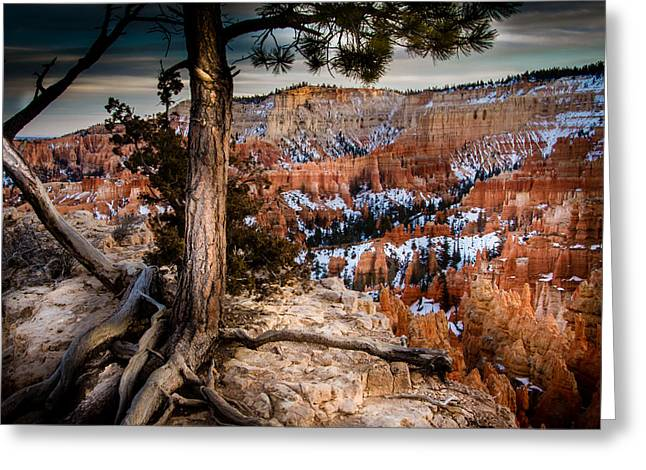 Southern Utah Greeting Cards - Bryce Canyon Greeting Card by Ron Broad