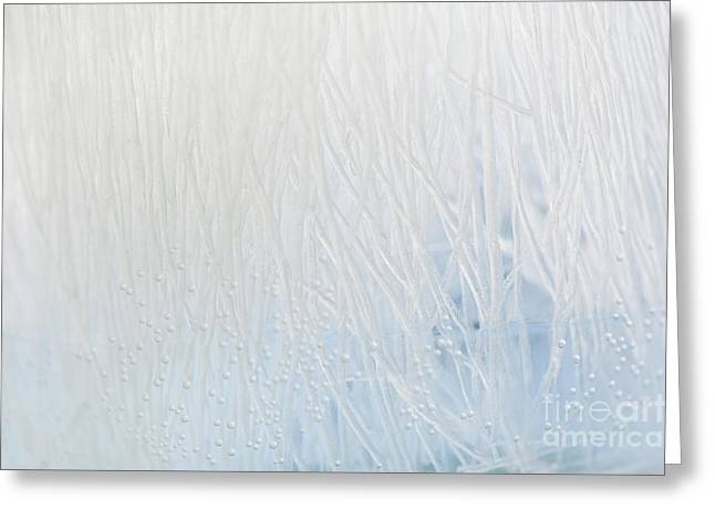 Bubbles Abstract Of Soaking Vermicelli Greeting Card by Arletta Cwalina