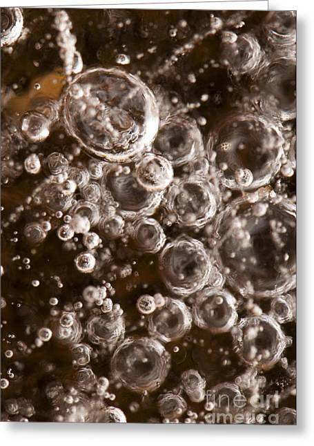 Wintry Greeting Cards - Bubbles Greeting Card by Anne Gilbert