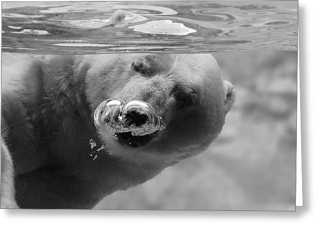 Polar Bears Greeting Cards - Bubbles Greeting Card by C.s.tjandra