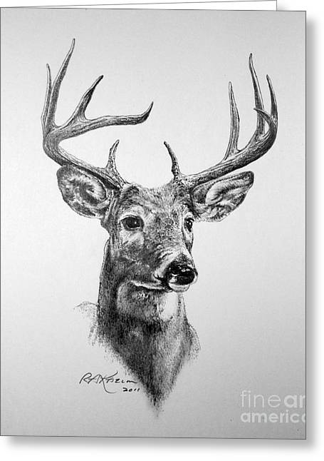 Nature Study Greeting Cards - Buck Deer Greeting Card by Roy Kaelin