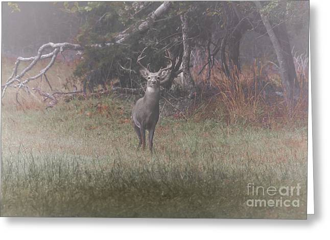 Buck In Foggy Bottoms Greeting Card by Robert Frederick