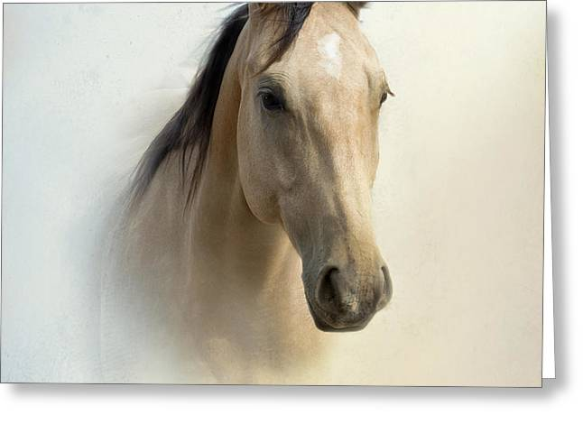 Buckskin Beauty Greeting Card by Betty LaRue