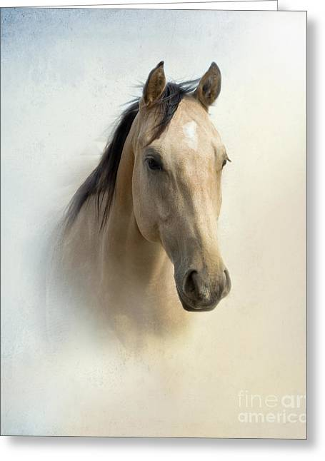 Quarter Horses Greeting Cards - Buckskin Beauty Greeting Card by Betty LaRue