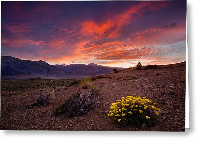 Sulfur Greeting Cards - Buckwheat Sunset Greeting Card by Dan Holmes