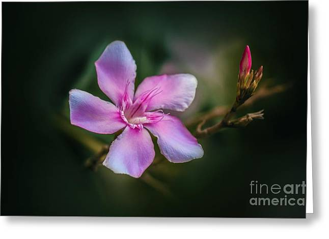 Pink Flower Branch Greeting Cards - Bud and Blossom  Greeting Card by Charuhas Images