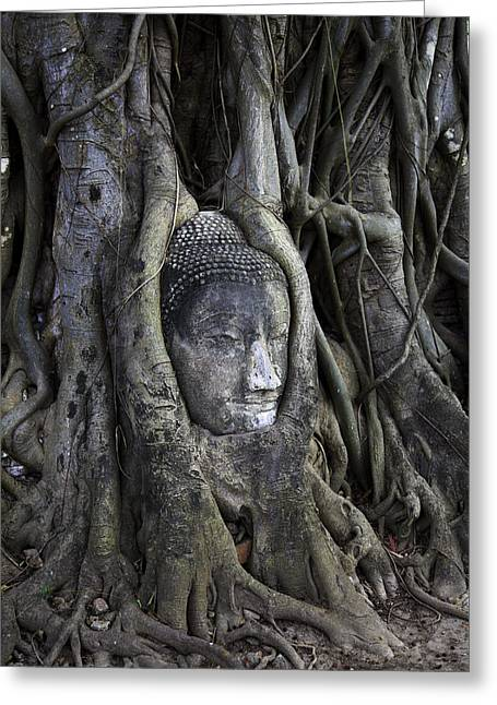 Adrian Evans Greeting Cards - Buddha Head in Tree Greeting Card by Adrian Evans