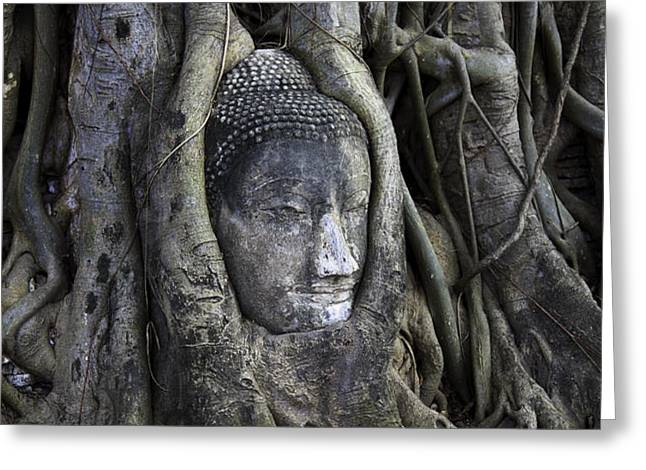 Buddha Head in Tree Greeting Card by Adrian Evans