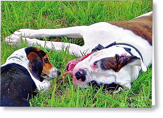 Dog Photographs Greeting Cards - Buddies Greeting Card by E Robert Dee
