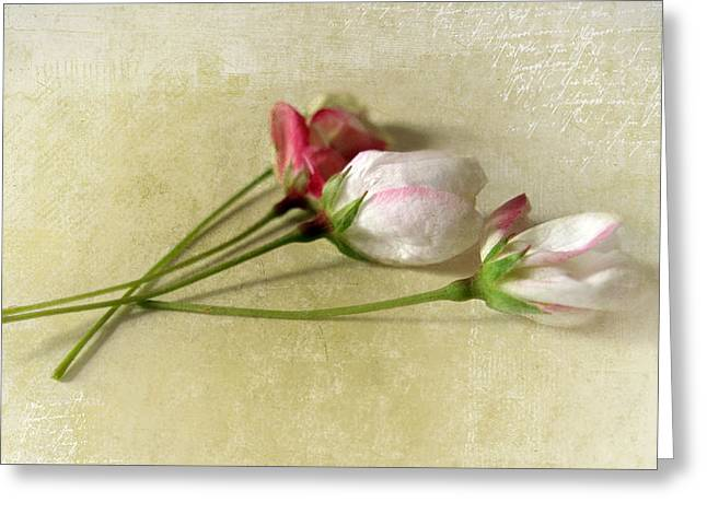"""""""flower Texture"""" Greeting Cards - Budding Blossom Greeting Card by Jessica Jenney"""