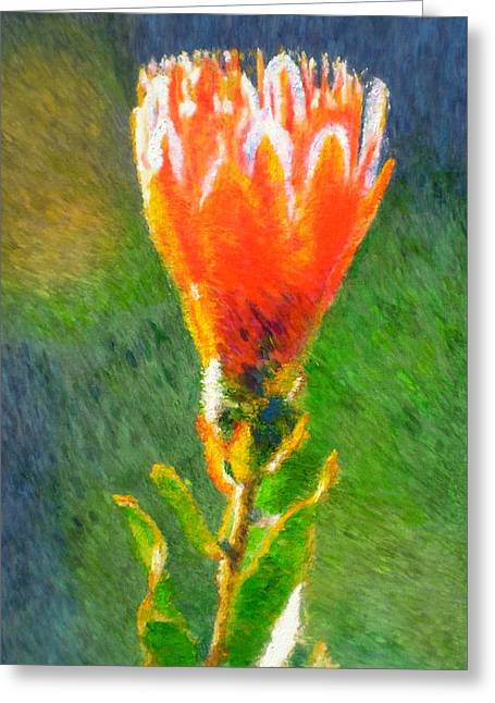 Proteas Greeting Cards - Budding Protea Greeting Card by Michael Durst