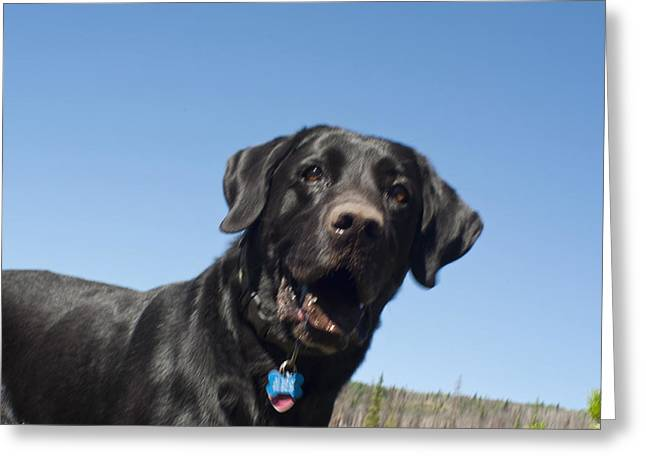 Spring In Maine Greeting Cards - Buddy Greeting Card by Daniel Hebard