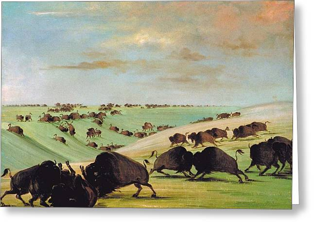Native Stone Greeting Cards - Buffalo Bulls Fighting in Running Season Greeting Card by George Catlin
