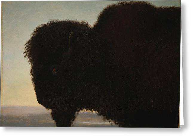 Bravery Greeting Cards - Buffalo Head Greeting Card by Albert Bierstadt