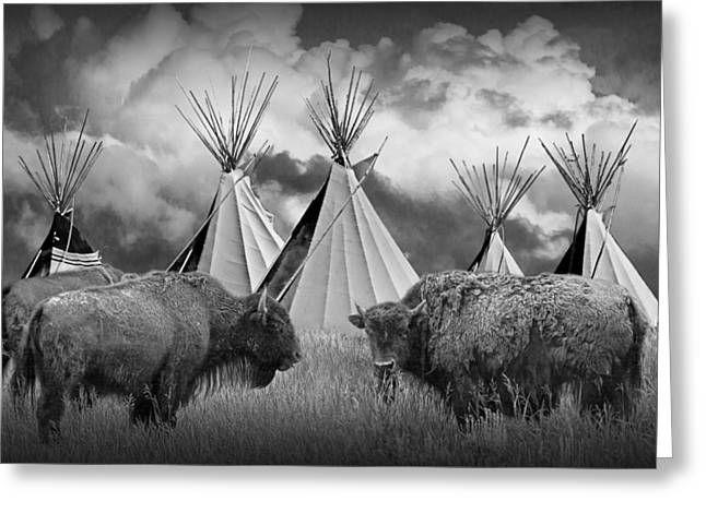 Powwow Greeting Cards - Buffalo Herd among Teepees of the Blackfoot Tribe Greeting Card by Randall Nyhof