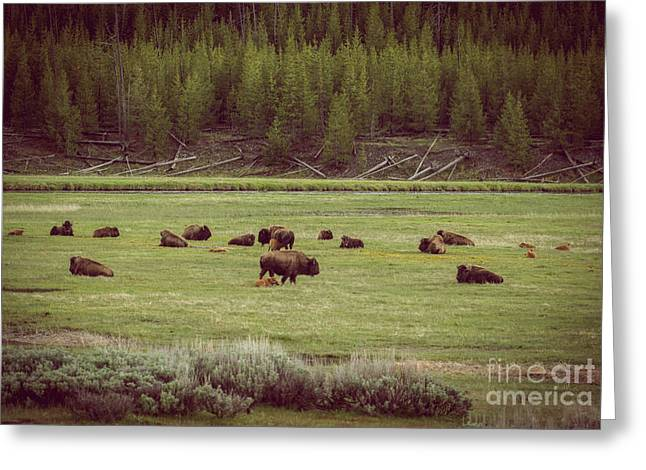 Buffalo Greeting Cards - Buffalo Herd Greeting Card by Robert Bales