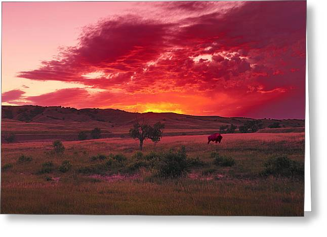 Prarie Greeting Cards - Buffalo in the Badlands Greeting Card by Christian Heeb