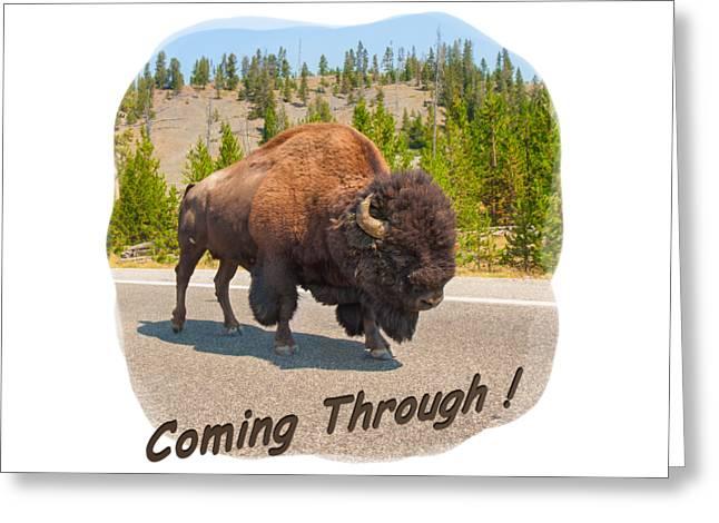 Short Sleeves Greeting Cards - Buffalo Greeting Card by John Bailey