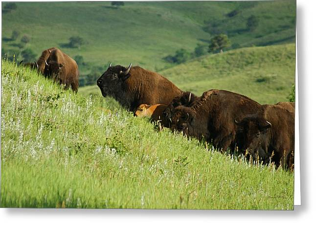 Bison Mixed Media Greeting Cards - Buffalo on Hillside Greeting Card by Ernie Echols