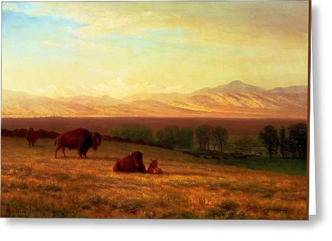 The American Buffalo Paintings Greeting Cards - Buffalo on the Plains Greeting Card by Albert Bierstadt