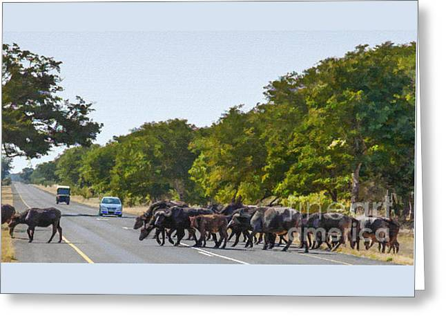 Buffalo Roadblock Greeting Card by Liz Leyden