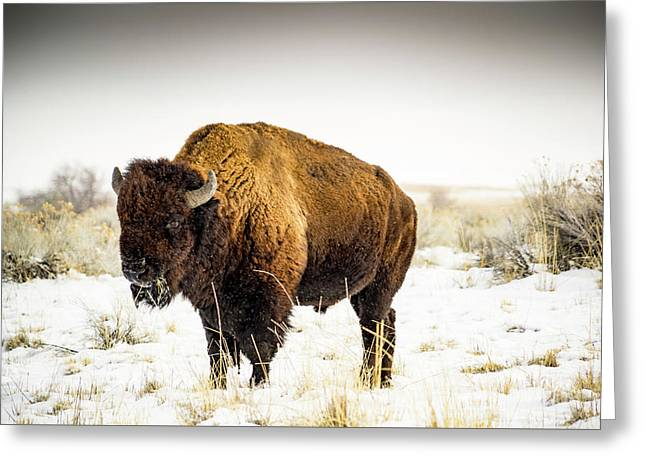 Buffalo Soldier Greeting Card by Peter Irwindale